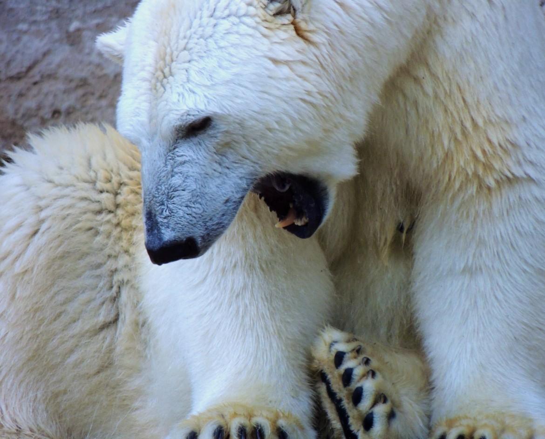 Polar Yawn