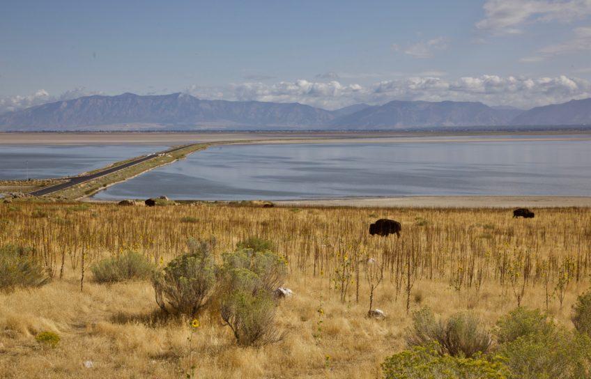 Bison and the Lake
